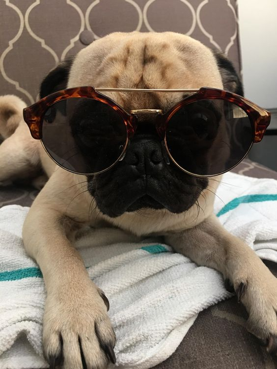 Little Leo Has Got Some Serious Weekend Vibes Going On Https Ift