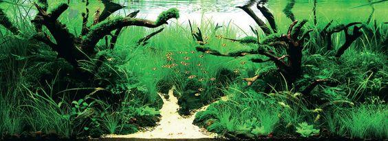 ::: AquaFloripa :::: IAPLC 2011 - Fotos dos 27 primeiros colocados em HD