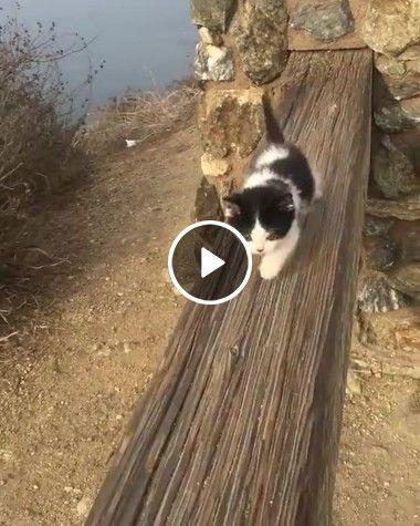 Parece que o gatinho está perdido na ponte