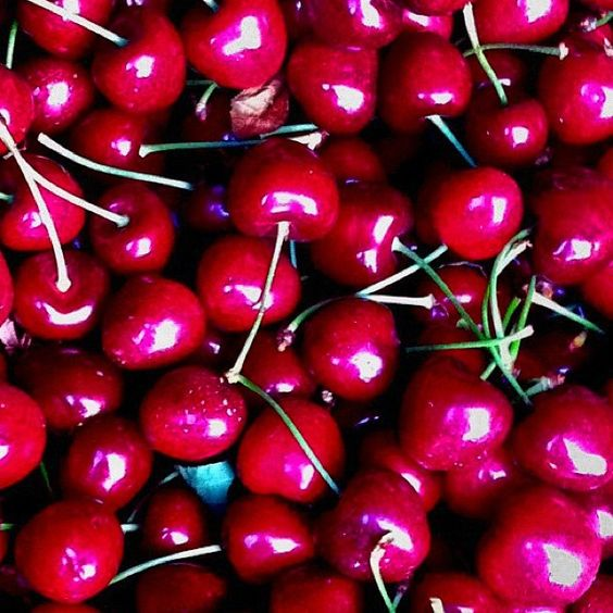 """Wassum Ranch cherries. The """"real"""" Middle Sister's family farm. #mswines #winesister #summer"""