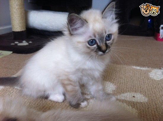 Pin On Pets And Other Cute Animal Pictures