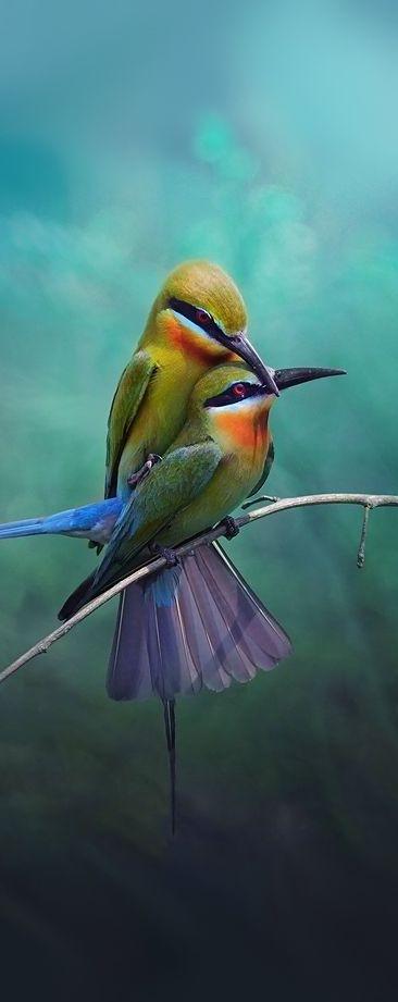 Les plus beaux oiseaux  F06267fd4177f80fbead4ee9ffb69881