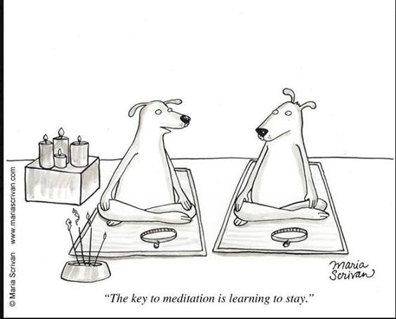 LOL! Re-pinned by http://www.tools-for-abundance.com/meditation.html