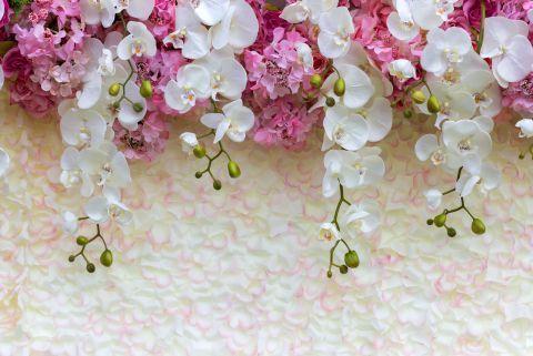 Fotooboi Nezhnye Cvety Orhidei Art 29513 Fotooboi Orhidei Cvety