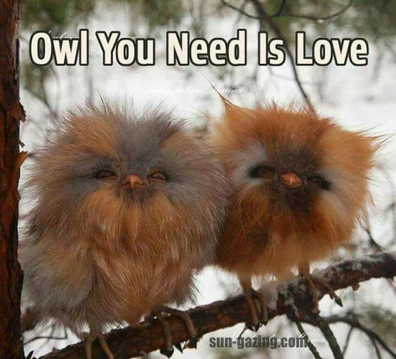 Owlets!