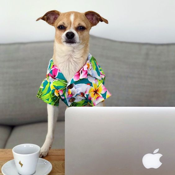 Dogs in clothes. Modern dog. Hawaiian dog shirt. Fashion for dogs by Dog Threads. Cute dog clothes. Hipster dog clothing. Dog clothing boutique. Dog models. #dogclothing #cutedogs #dogbirthday #doggoals #dogmom SHOPDOGTHREADS.COM