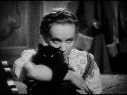 """*Marlène Dietrich*   """" I want to be alone................with my cats."""""""