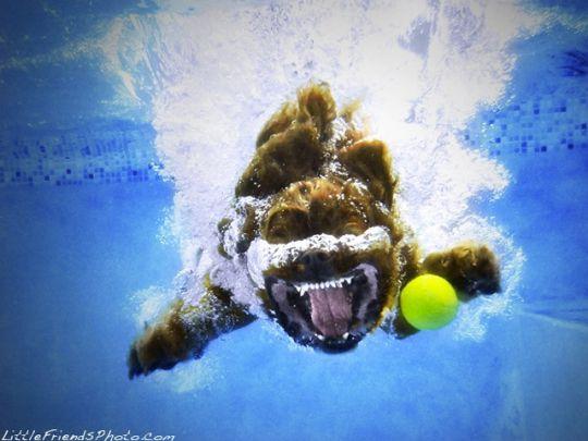 Cachorro mergulhando