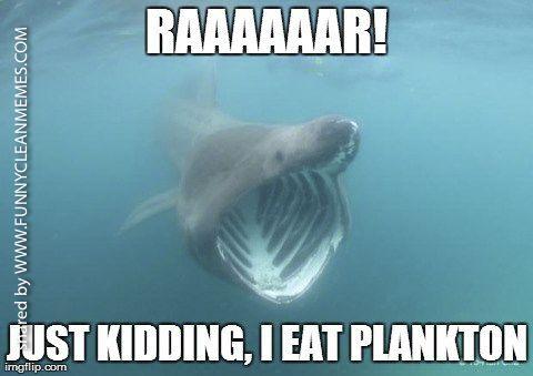 Shark Week Memes Sharks Funny Shark Week Memes Misunderstood Shark