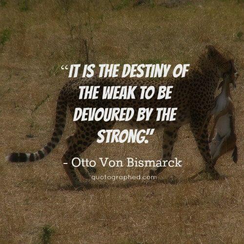 Otto Von Bismarck Survival Of The Fittest Quotes Survival Combat Quote Normal Quotes Survival Quotes