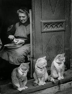 CATS*GATS*GATOS: cats