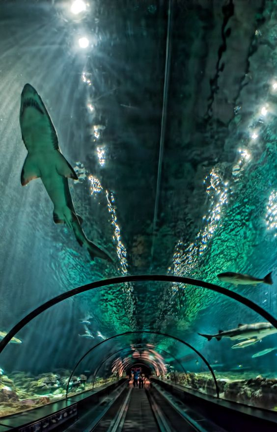 Glass Tunnel Through The Shark Exhibit at Sea World, Orlando, Florida