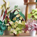 As incríveis plantas de papel (que não morrem nunca!) criadas por Corrie Hogg