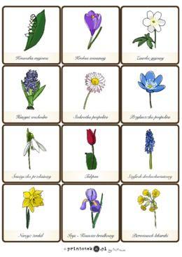 Kwiaty Karty Z Podpisami Printoteka Pl Plants Material