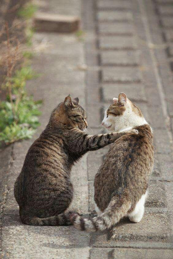 語り合う野良猫)