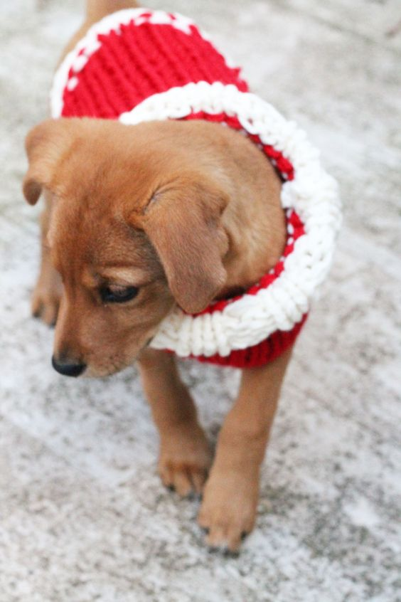 Christmas puppy sweater free knitting pattern - make your puppy a cozy sweater this holiday season! #knitting #Christmas