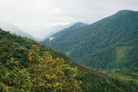 La humedad que proviene de la Amazonia, penetra en los valles y montañas de la vertiente andina, creando un ambiente favorable para el desa...