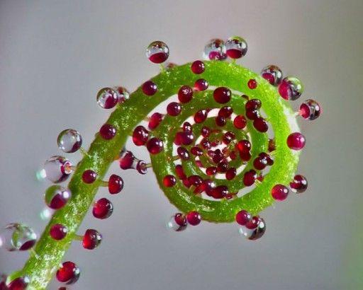A geometria milimétrica das plantas e a sequência Fibonacci - Pensamento Verde