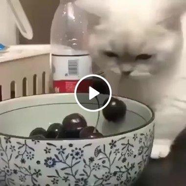 Esse Gatinho gosta de cereja.