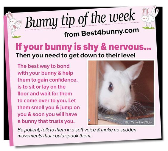 Ehmkay Nails Shy Bunny Easter Nail Art: If You Have A Shy & Nervous