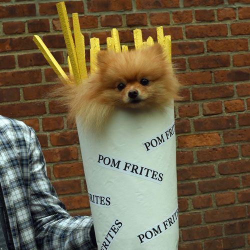 45 Epic Dog Halloween Costume Ideas 2020 Guide Clever Dog Dog Halloween Costumes Dog Halloween