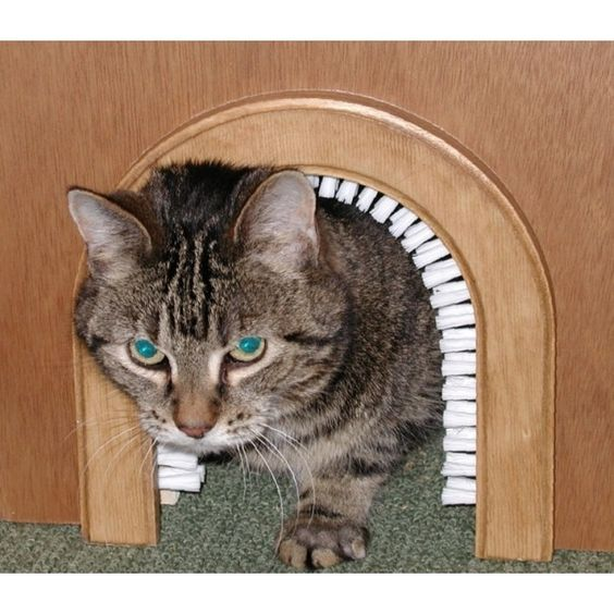 Brushes built ins and grooms on pinterest - Cat door for hollow core door ...