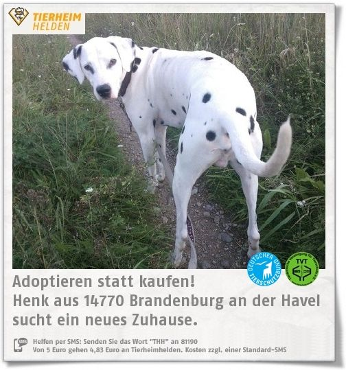 Good Die besten Tierheim brandenburg Ideen auf Pinterest Tierheim in meiner n he Tierheim andernach hunde und Kinderfreundlicher Garten