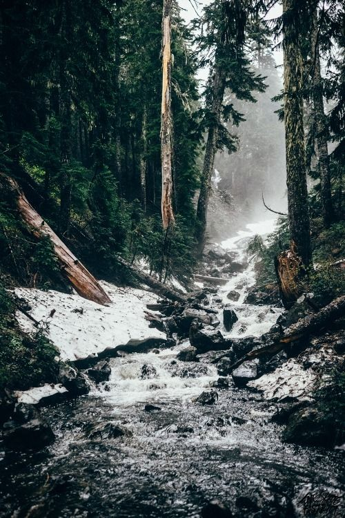 nieve, bosque y río. que belleza *