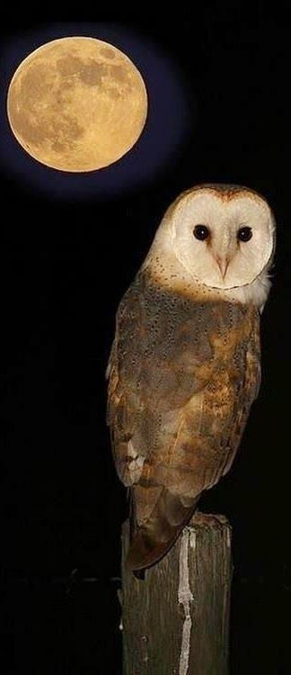 I have had a owl fly on my roof this past full moon strange how life can mirror it's self