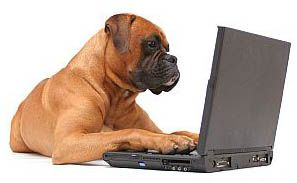cute dog at laptop