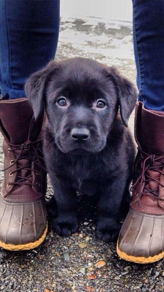 ♡♡Lovely Pups & Cats♡♡: Top 10 Cutest Dog Breeds Of World