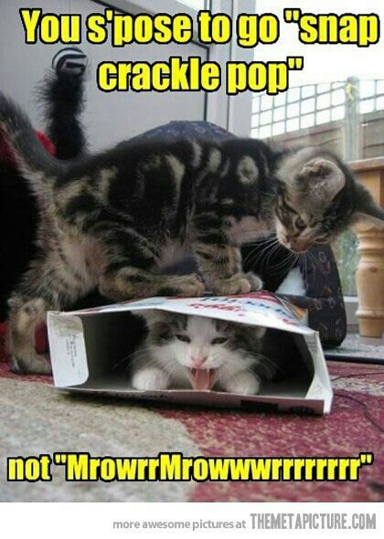 Kittens. #kittens #feline #funny