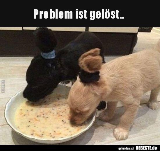Problem Ist Gelost Lustige Bilder Von Tieren Hund Funnies Tiere