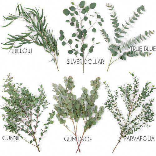 Choose Your Own Eucalyptus Greenery Pack #weddingideas