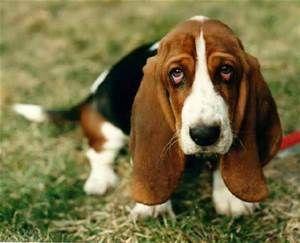 Resultados de la búsqueda de imágenes: razas de perros - Yahoo Search