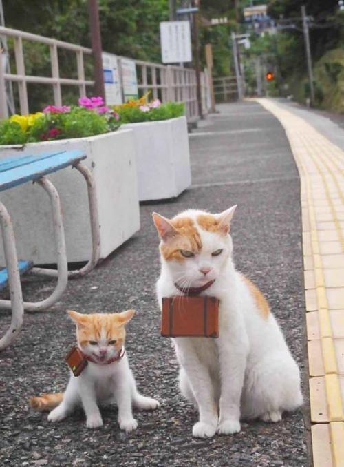 Gatos de viaje