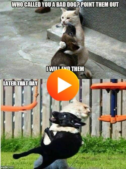 List Of 12 Best Funny Comebacks And Insults In Week 1 In 2020 Funny Animal Jokes Funny Animal Memes Funny Cat Memes