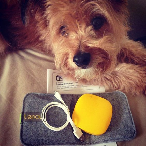 I don't know who's cuter - the puppy or the Moonstone! http://www.lepowglobal.com/products/moonstone/