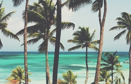 palms by the sea please