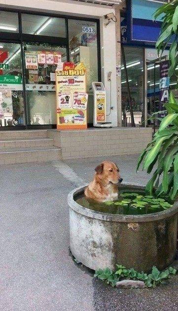 This dog.: