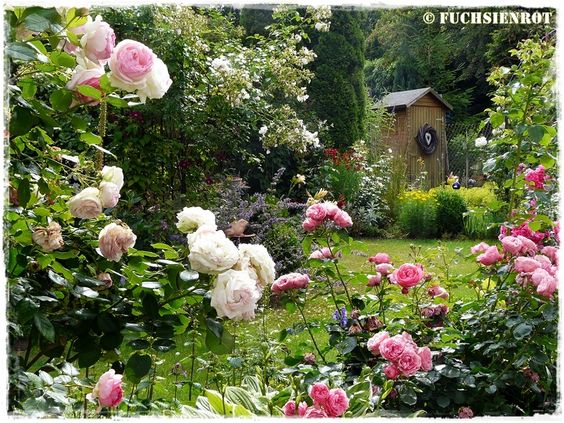 Ein Blick in meinen Sommergarten zur Rosenzeit