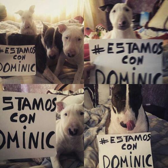 We want justice for Dominic!
