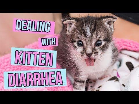 How To Deal With Kitten Diarrhea Youtube Kitten Kitten Care Kitten Rescue