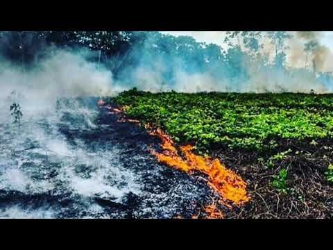 Amazon Rain Forest Fire In Tamil Pray For Amazonia Solution