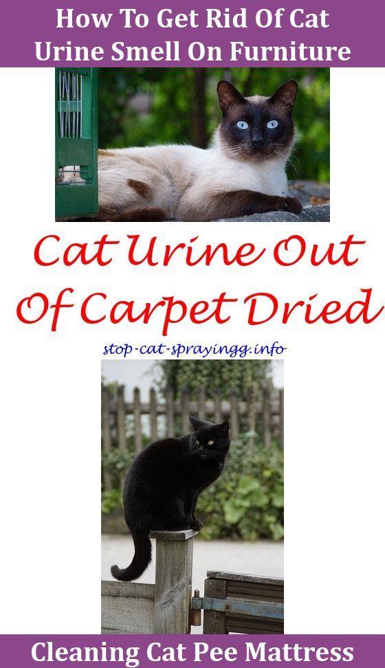 Cat Spray Litter Box Cat Spray Male Cat Spraying Cat Urine Smells
