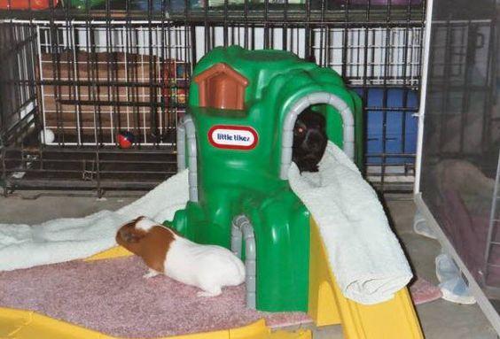 Toddler Toy Furniture - petdiys.com
