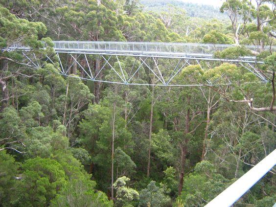 Valley of the Giants Tree Top Walk, Walpole, Western Australia