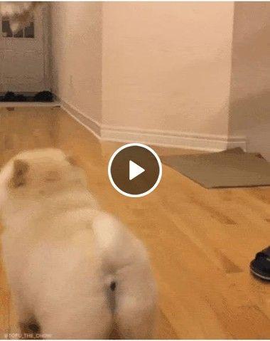 O ataque poderoso do cão fofo, faltou pouco para ele conseguir