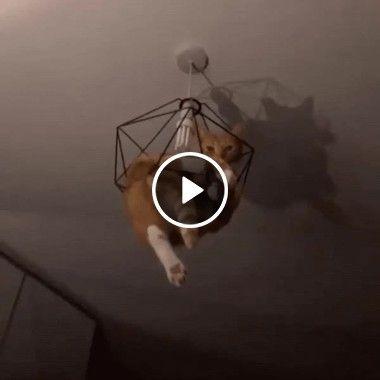 Alguém sabe explicar como esse gato conseguiu chegar ai?