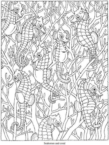 Ocean Coloring Pages For Adults Sea Animals